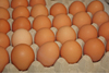 /product-tp/farm-fresh-chicken-table-eggs-brown-and-white-shell-chicken-eggs-50027032275.html