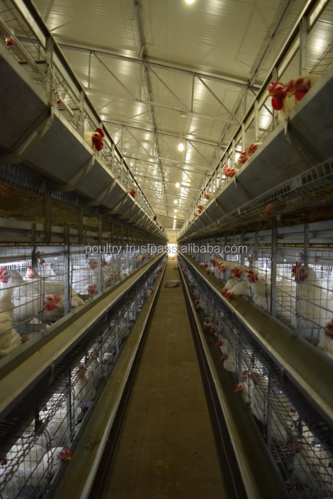 Pullet Cages for breeders