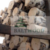 White Birch Logs Baltic Birch Logs