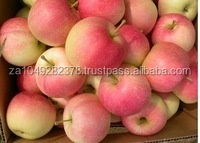 Fresh Royal Gala Apple from south africa