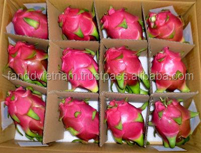 VERY COMPETITIVE PRICE DRAGON FRUIT IN VIETNAM
