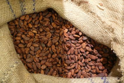 Cocoa beans with low price