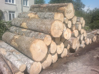 ASPEN LOGS FROM LITHUANIA/LATVIA/BELARUS/UKRAINE (Populus tremula)
