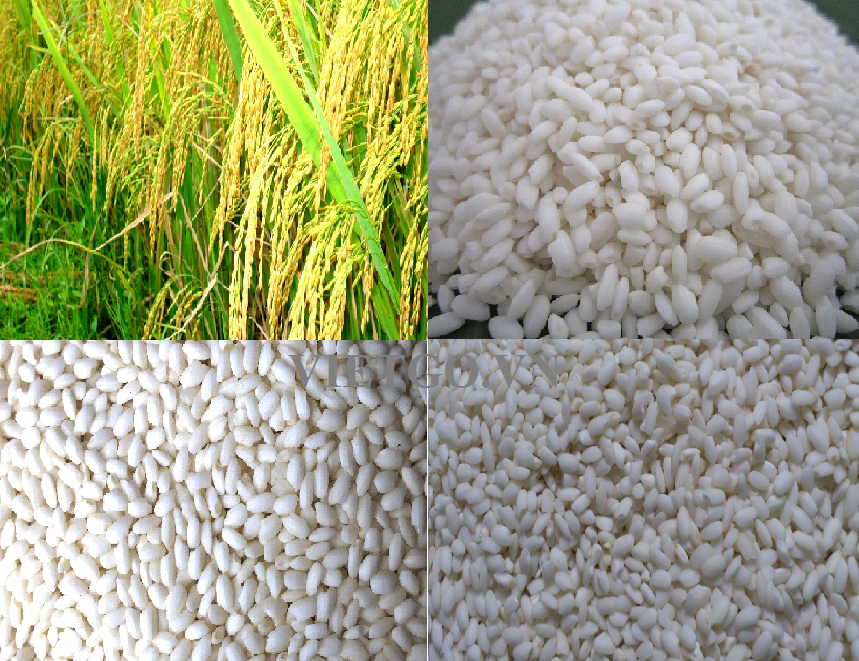 Japonica Rice / Vietnam short grain round rice