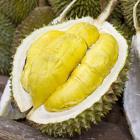 Wholesale Fresh Durians for sale