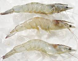 BRC / IFS /FDA certification high quality vacuum pack frozen vannamei shrimp