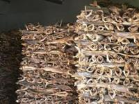 Best Quality Dried Stockfish and Cod from Faroe Islands