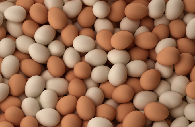 Fresh Chicken Table Eggs And Fertilized Hatching Eggs at affordable prices