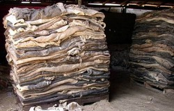 Wet Salted Donkey Hide, Dry Donkey Hide , Dry and wet salted cow hide