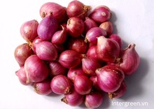 High Quality Fresh Red Shallot From Vietnam