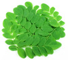 Dietary Supplement Herbal Remedies Moringa Powder Leaf