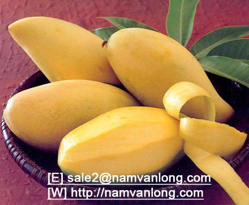 FRESH MANGO with HIGH QUALITY AND COMPETITIVE PRICE...