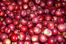 bulk fresh apples