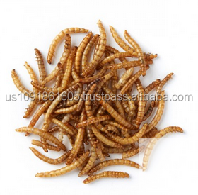 Organic chicken feed dried mealworm