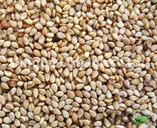 Best Quality Sortex Natural Sesame Seeds from India