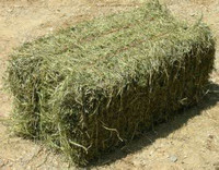 Top Quality Alfafa Hay for Animal Feeding Stuff Alfalfa / Alfalfa Hay / Alfalfa Hay for export