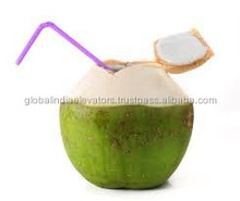 green young coconut for sale