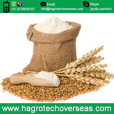 export wheat flour