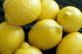 africa fresh lemon for sale on cheap price
