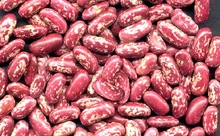 2016 Crop Light Speckled Kidney Beans /Sugar Bean
