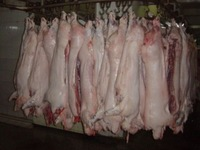 Frozen Rabbit Meat / frozen rabbit skin