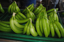 farm fresh green banana