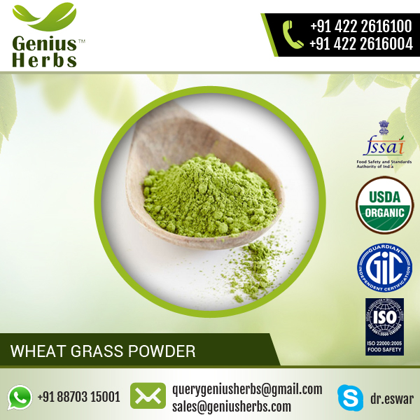 Outstanding Range of Wheat Grass Powder from Top Exporter