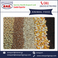 Hot Sale of Ready to Sell Organic Grade Animal Feed
