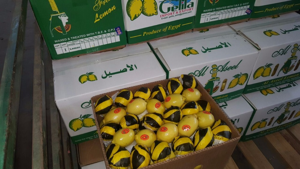 high quality lemon from egypt with best price 15 kg for carton all size is available
