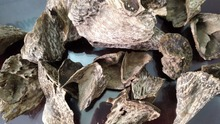 Vietnam aquilaria crassna - Wild, pure, much oil on agarwood chips, accept small order for testing scent