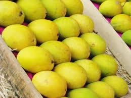 BEST QUALITY FRESH GREEN CHAUNSA MANGO FOR SALE