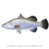 Snoek Seafrozen H&G&T Frozen Fish, Salted Fish Snoek Fish Snake Fish FOR SALE