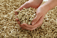 Pine Oak Wood Pellets for Fuel