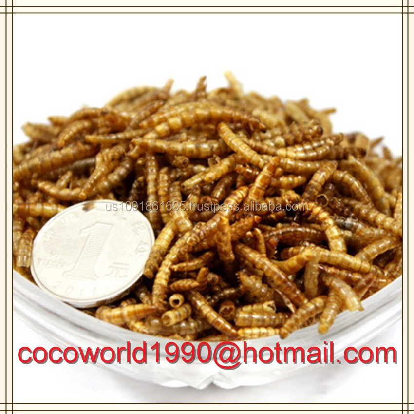 microwave dried meal worms bulk or bird food