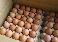 Good Poultry Table Eggs White And Brown Chicken eggs