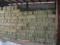 high pritein alfalfa hay for cattle and horse