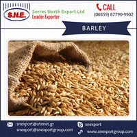 Premium Grade Organically Grown Barley with Low Moisture Content Available at Affordable Price