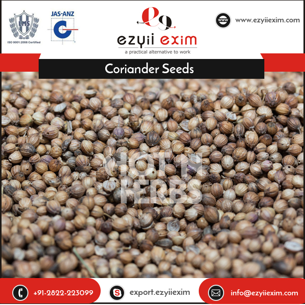 Genuine Exporter Selling Coriander Seeds for Digestion Curing