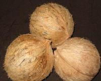 Natural Indian Semi Husked Coconuts 2016