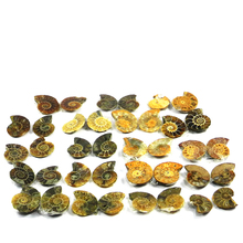 Celebrate The Season With Christmas Special Offer!!! 20 Pcs Natural Ammonite 100 Gram, Mix Cab Gemstone For Jewelry SI0583