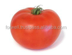 Wholesale super appetite farm fresh tomatoes for sale with high quality/ tomatoes with great price