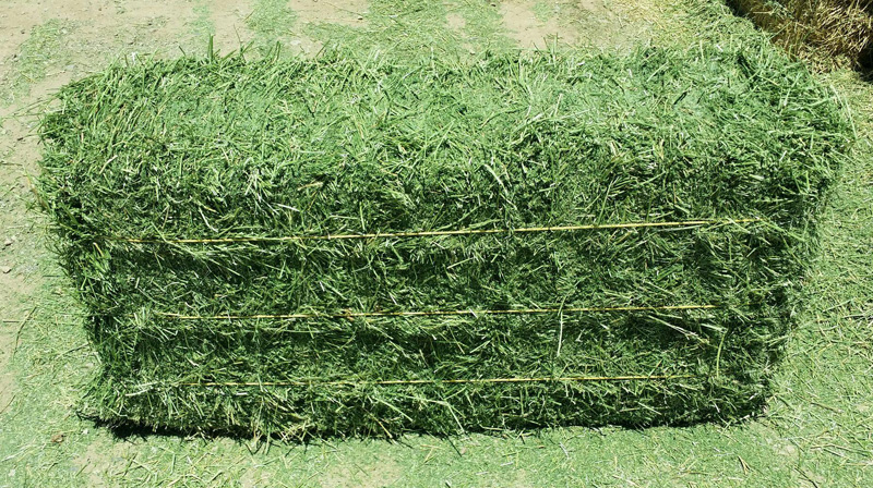 Grass Hay and Alfalfa Hay Animal Feed