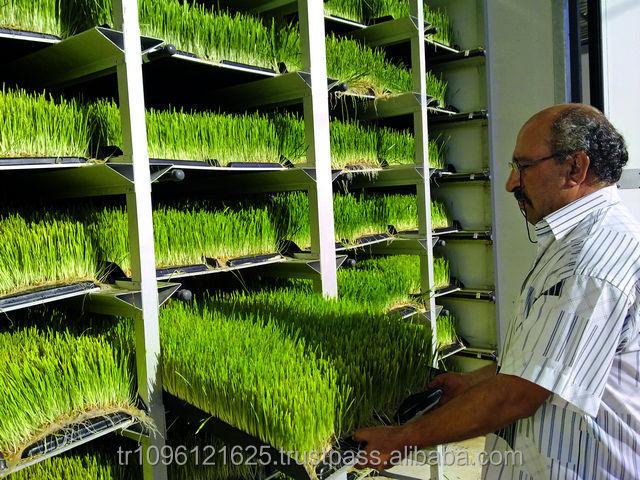 Выращивание сои гидропоника 5