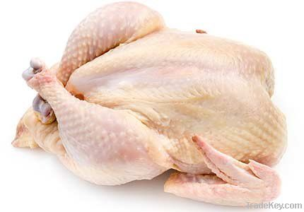 Frozen Chicken Halal
