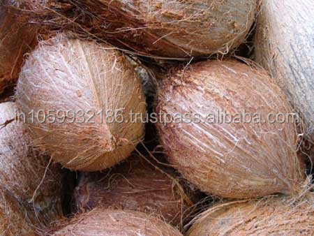 Best Quality India Coconuts in Best Price