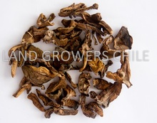 Dried Mushrooms From Chile