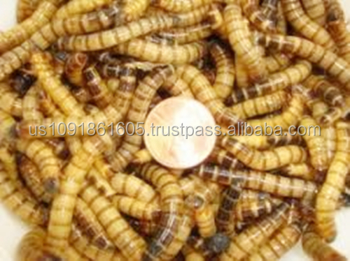 Dried Superworms