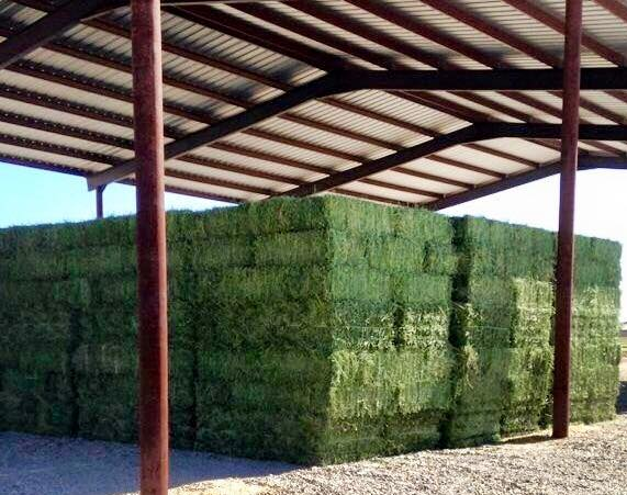 Best Quality Alfafa Hay for Animal Feeding in Bales