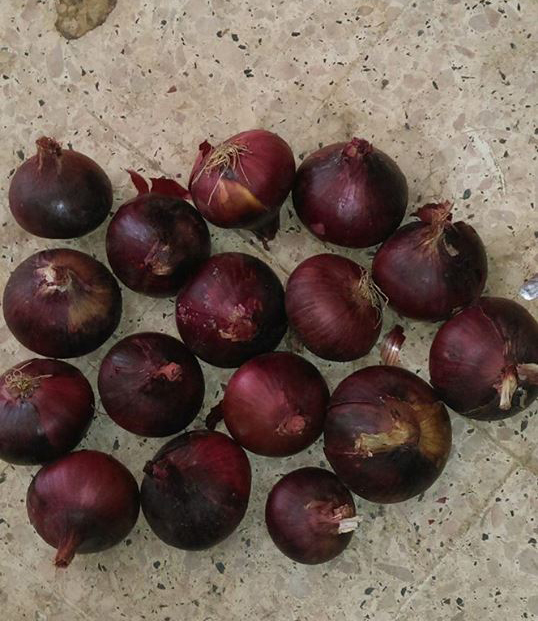 Fresh Egyptian Red Onion