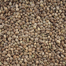 Premium Quality Sun Hemp Seed for Sale
